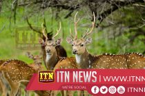 Trincomalee Deer in need of attention