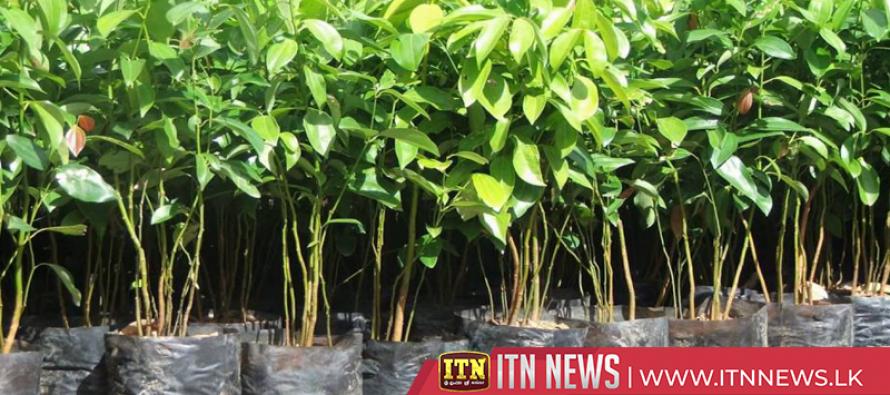 1,000 million dollars through Cinnamon exports