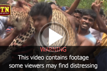 Villagers in Kilinochchi kill leopard after it attacks 10 people