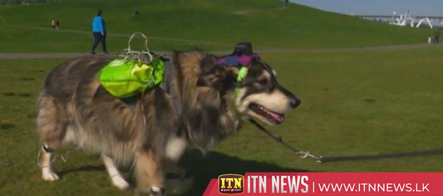 Dog vision project analyses canine behaviour through sight