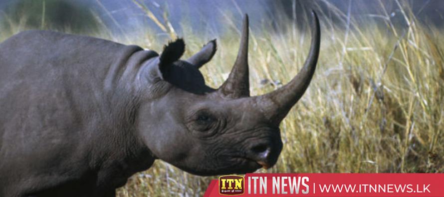 Eight endangered black rhinos die in Kenya in botched relocation