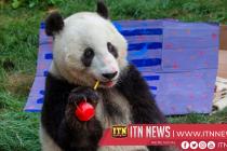 Giant panda celebrates sixth birthday at San Diego Zoo