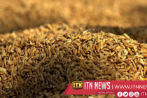 978 metric tons of paddy purchased in two days