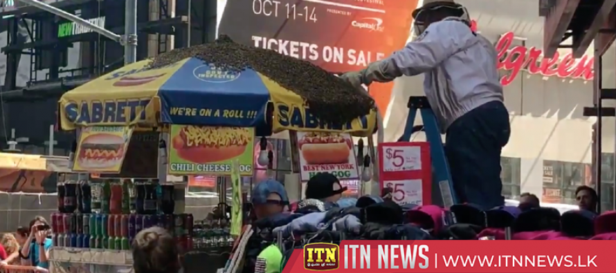 Bees swarm hot dog cart in Times Squae, police shut down street