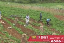 Potatofarmers get highest prices