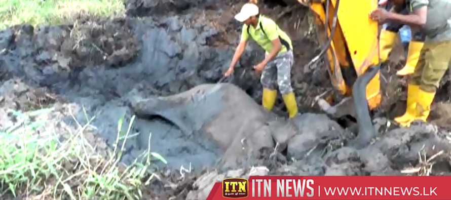 Elephant calf stuck in mud rescued after an operation