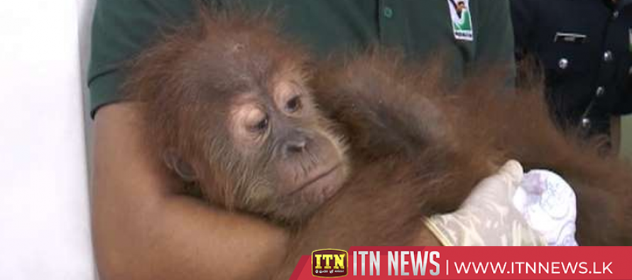 Malaysia foils attempt to smuggle more than 400 exotic animals