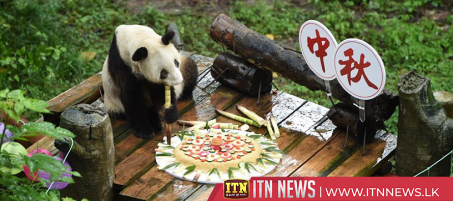 Zoo animals celebrate Mid-Autumn Festival with special moon cakes