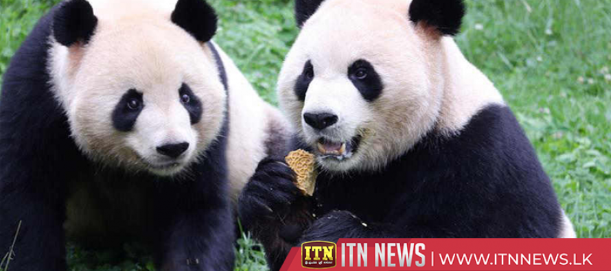 Animals treated with mooncakes ahead of Mid-Autumn Festival in Yunnan zoo