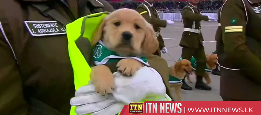 Gang of puppies steals the show at Chilean military parade