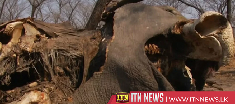 Botwana officials deny 87 elephant carcasses found