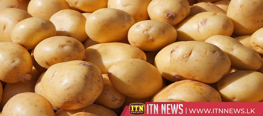 200 metric tons of potatoes to be purchased daily from cultivators