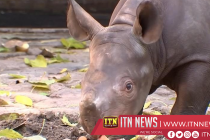 Baby black rhino takes wobbly first steps at Berlin zoo