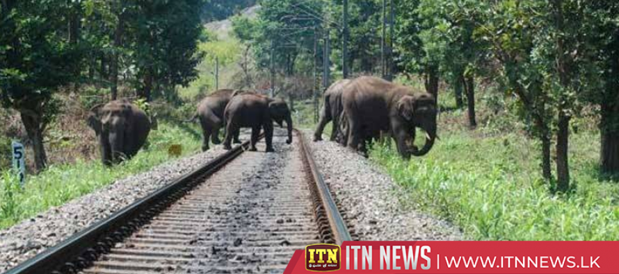 Observationteam appointed to prevent elephant-train collisions begins its work