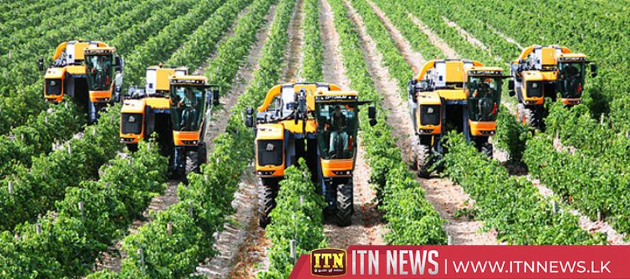 German winemakers toast best harvest in 20 years