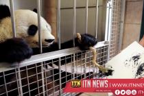 Vienna zoo's painting panda creates animal-like images