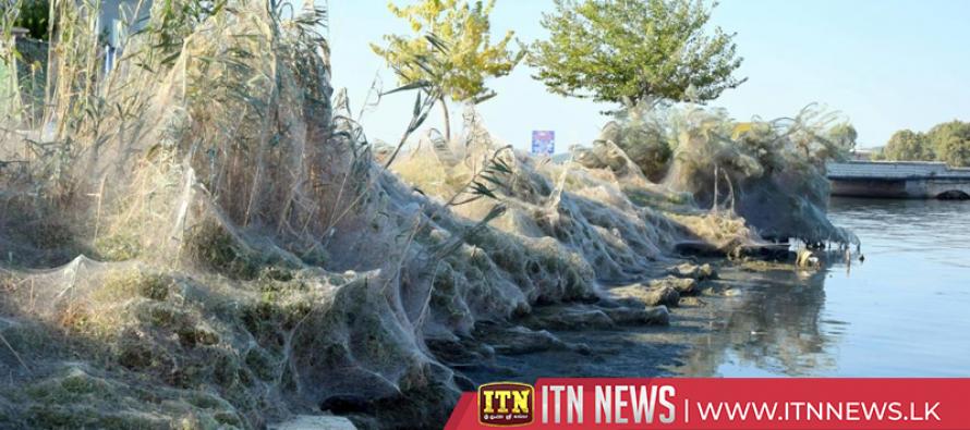Large spider web envelops coastline of Greek lake