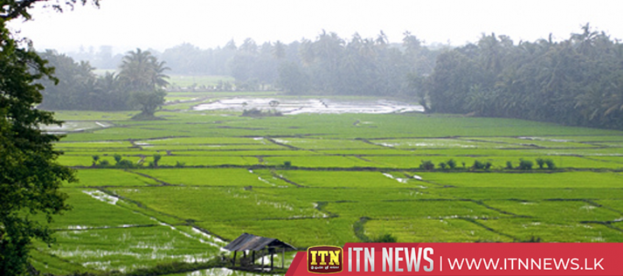 Mapping of paddy lands in the country to be carried out soon