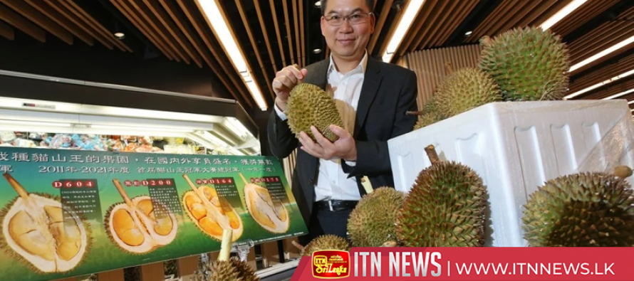 Chinese demand for the pungent durian drives growth of plantations in Malaysia
