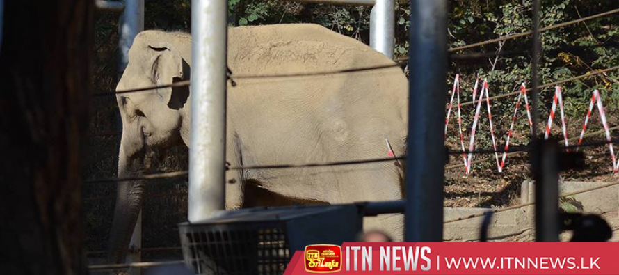 Elephant recovers after tusk surgery in Tbilisi zoo