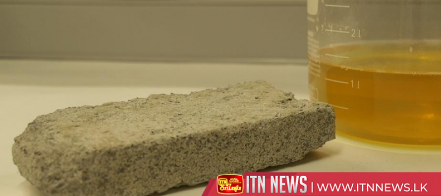 "South African students make human urine bricks from ""liquid gold"""