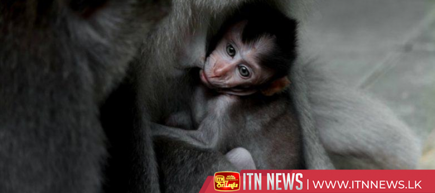 Moscow zoo welcomes newborn gorilla