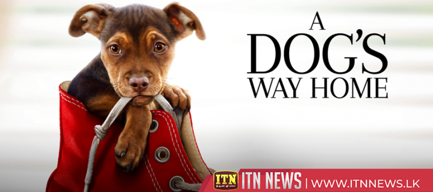 """""""A Dog's Way Home"""" set to be released next month"""