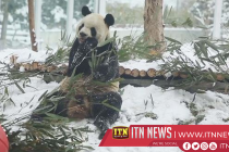 Animals enjoy snowy pleasure at Xi'an Wildlife Park