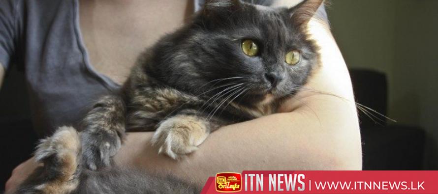 Cats can follow and interpret human gazes, Hungarian researchers say