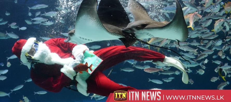 Santa Claus spreads underwater Christmas cheer in Tokyo