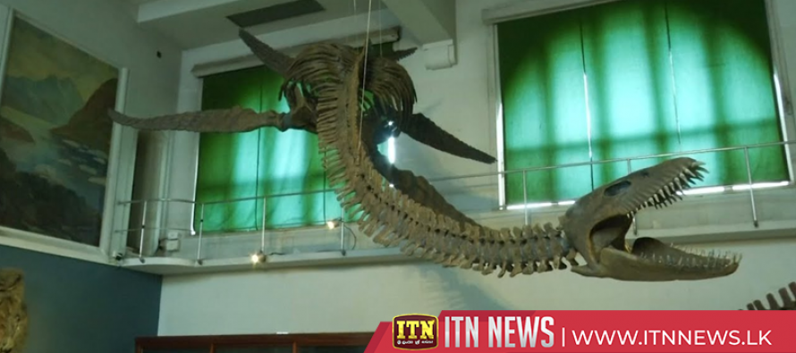Prehistoric marine reptile finds new home in Argentine museum