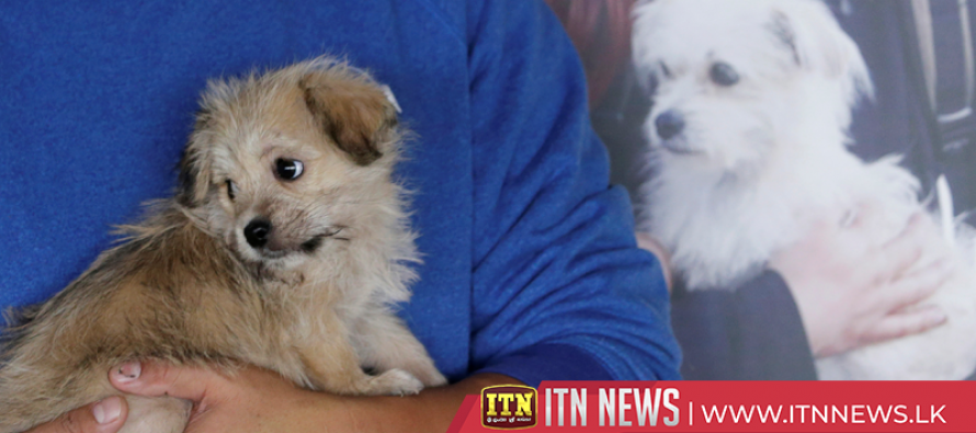 China's first pet cloning service duplicates star pooch