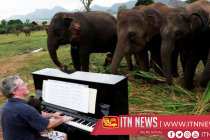 British pianist plays classical music to soothe elephants at Thai sanctuary