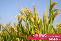 வட மத்திய மாகாணத்தில் தேசிய நெல் உற்பத்தியை அதிகரிக்கும் திட்டம்