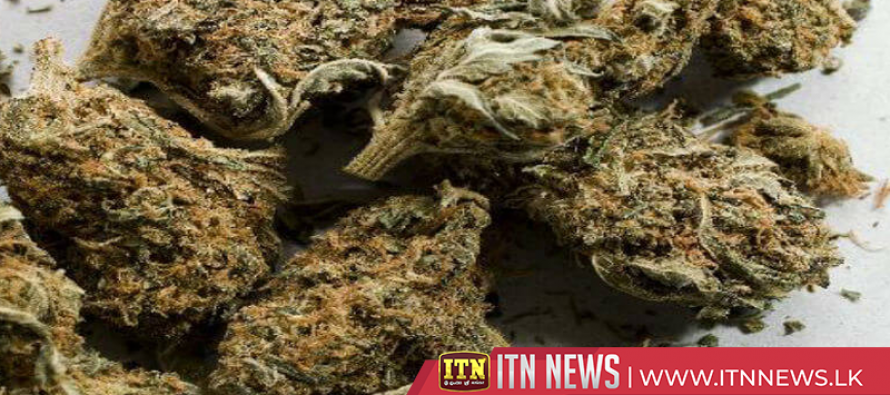 2.1kg of Kerala Cannabis seized from Mannar