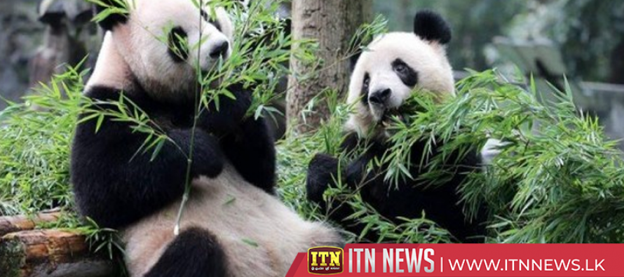 Baby animals meet visitors ahead of Chinese New Year at Shanghai zoo