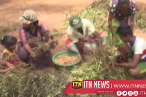 Walawe peanut cultivators hindered by dry climatic conditions