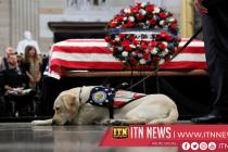 Sully, George H.W. Bush's sevice dog, starts new job