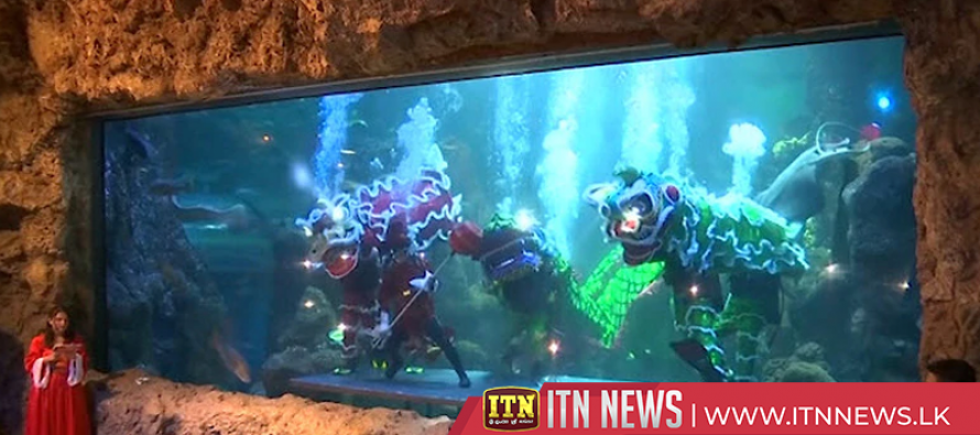 Indonesian aquarium celebrates Lunar New Year with underwater lion dance