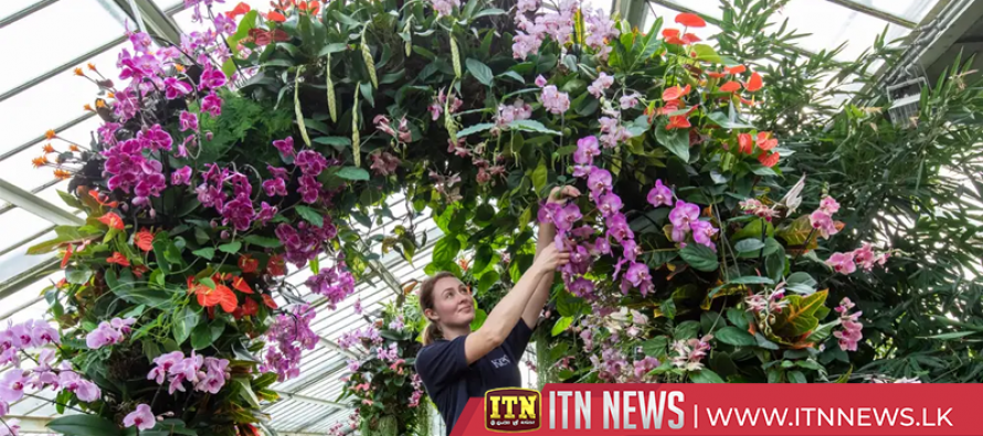Kew Gardens celebrates Colombia with this year's orchid festival