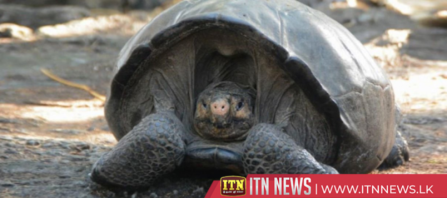 Thought extinct for 100 years, giant tortoise turns up in Galapagos