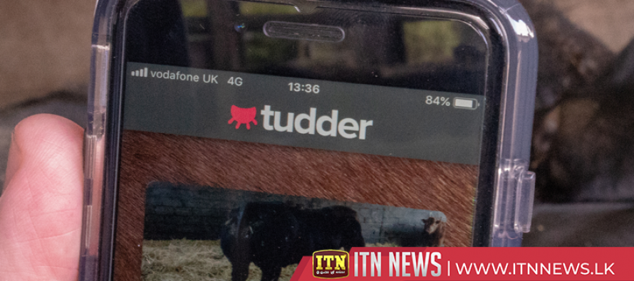 'Tinder for cows' matches cattle in the mood for love