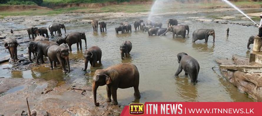 Pinnawala elephant orphanage makes 700 million rupees