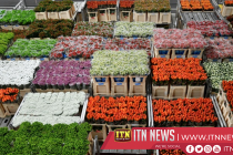 Brexit uncertainty could have withering effect on UK's flower industry