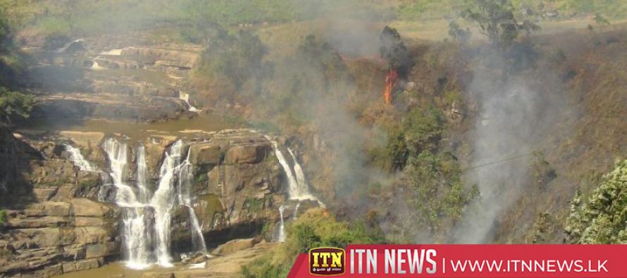 Fire destroys 100 acres at forest reserve