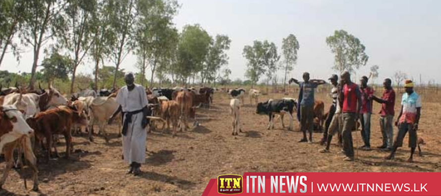 At least 134 Fulani herders killed in central Mali