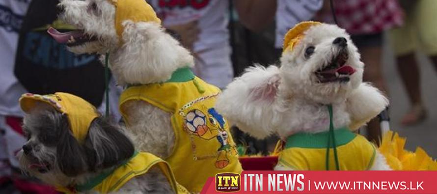 Dogs take the spotlight at Brazil's dog carnival parade