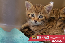 Saudi initiative offers cats and dogs perfect homes