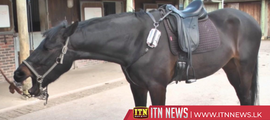 Fitbit-like device for horses aims to save equine lives