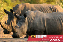 Bush fortress protects wildlife from poachers